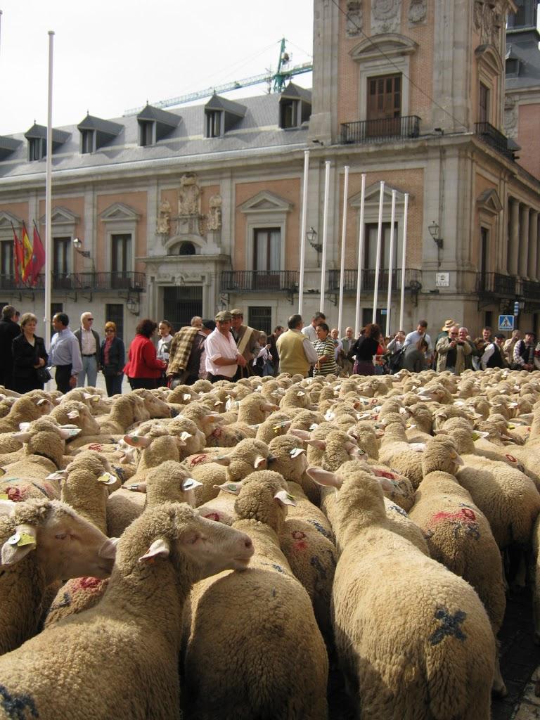 Die Schafe erobern Madrid