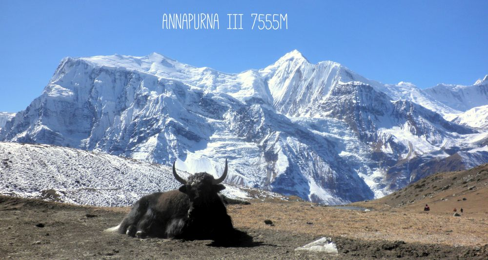 Jack Rind vor dem Annapurna Massiv