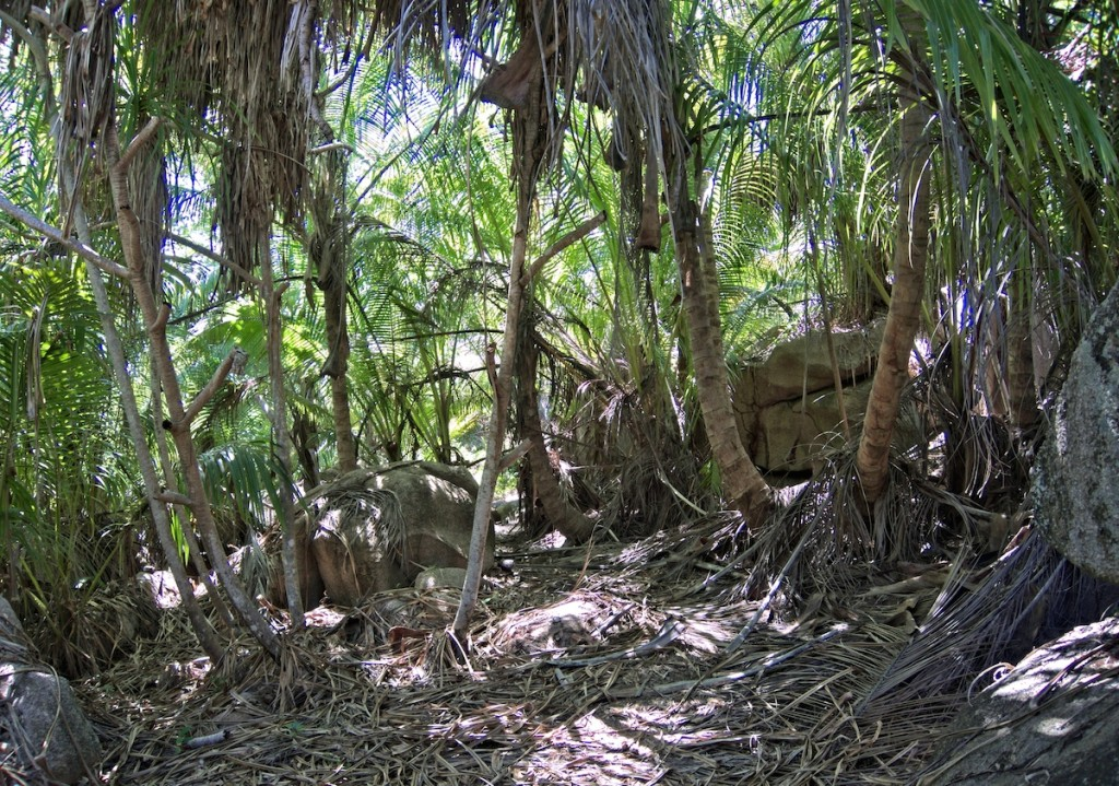 Wald auf La Digue