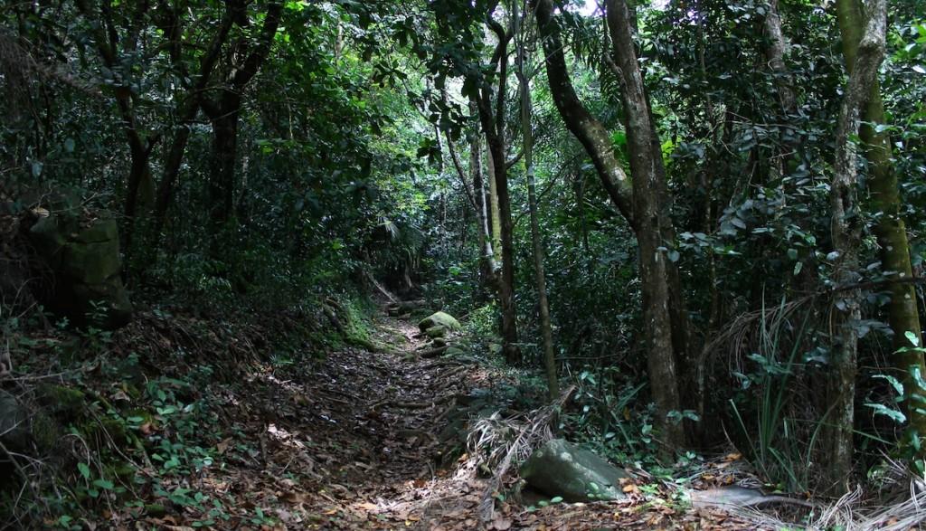 Wanderweg auf den Seychellen durch den Wald