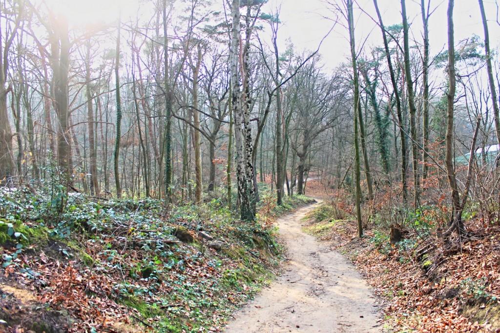 Wanderpfad im Grafenberger Wald