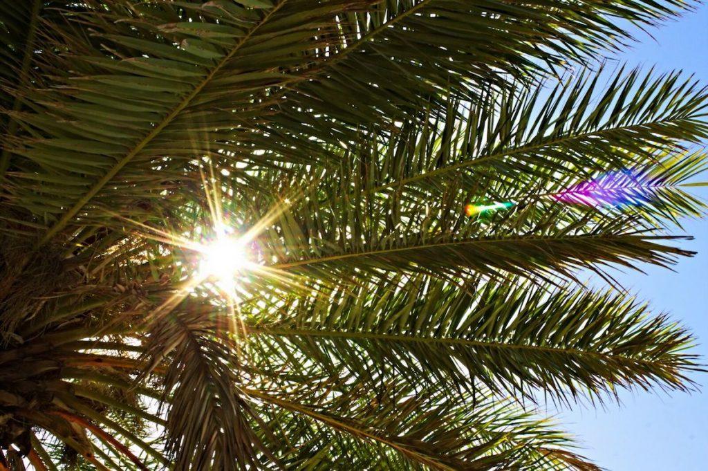 Palme mit Sonne