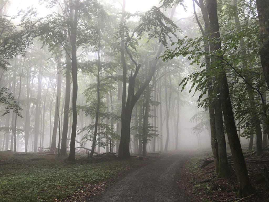 Nebelwald Nationalpark Eifel