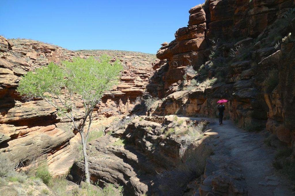 Schlucht im Grand Canyon