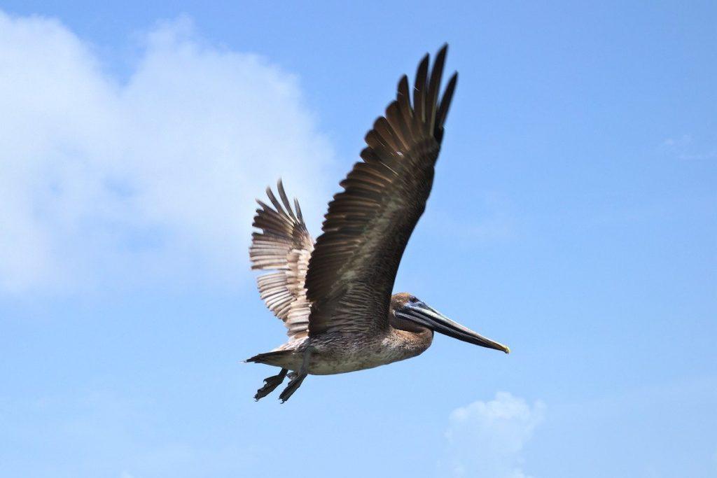Vogel in der Dominikanischen Republik