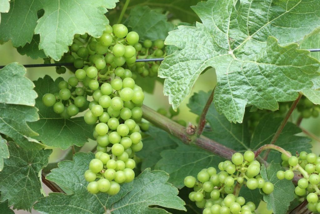 Wochenende in Winterswijk Wein