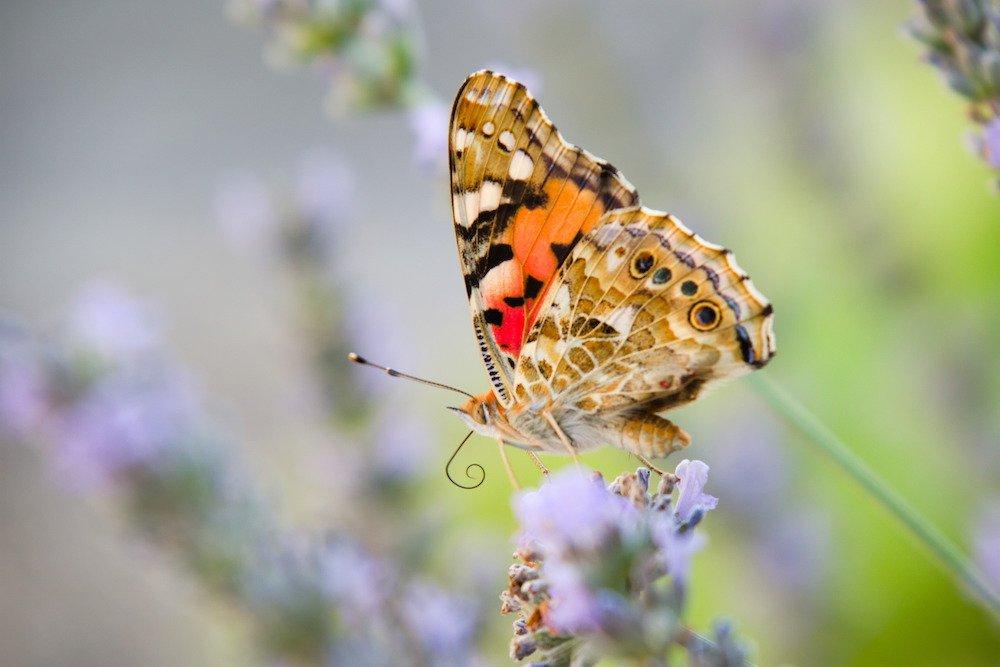 unsere schönsten Fotos 2019 Schmetterling
