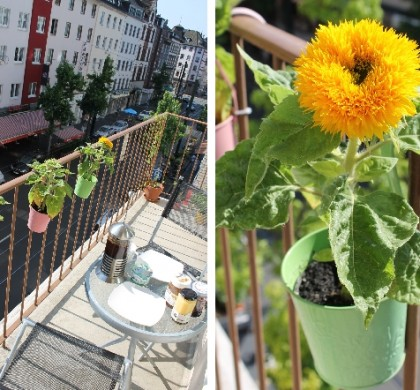 Sommer auf dem Balkon