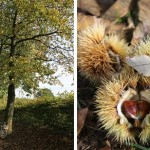 Kürbis und Maronen – ein perfektes Herbst Rezept