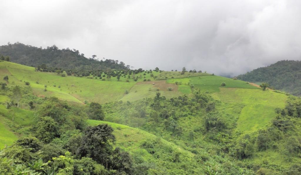 Gründe Hügel und viel Natur in Thailand