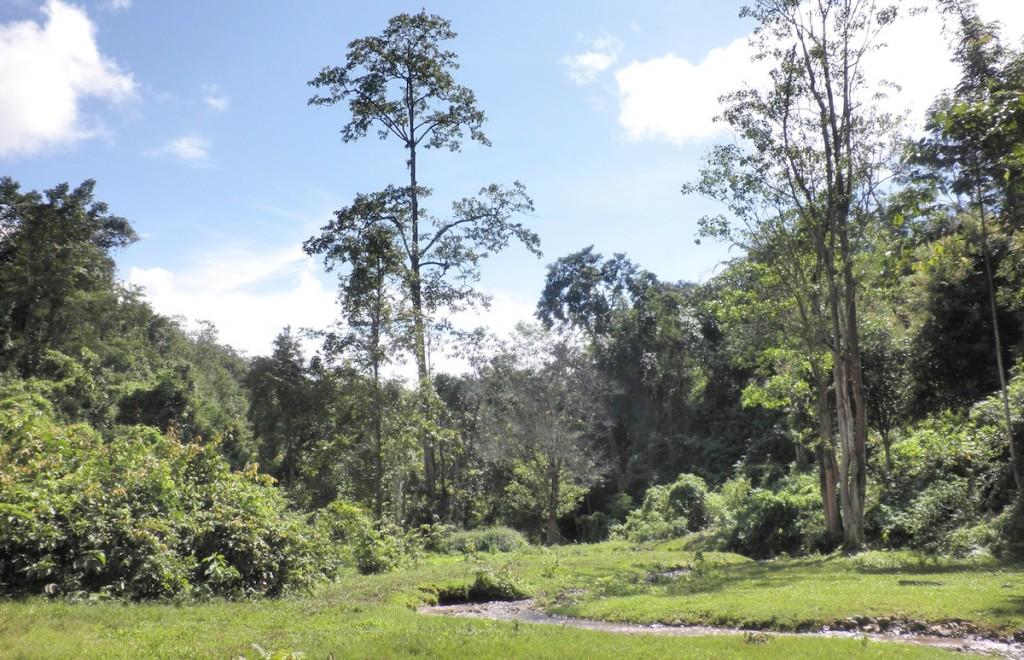 Gründe Natur im Norden Thailands