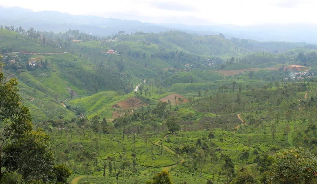 Grünes Tal in Sri Lanka aus dem Zug gesehen