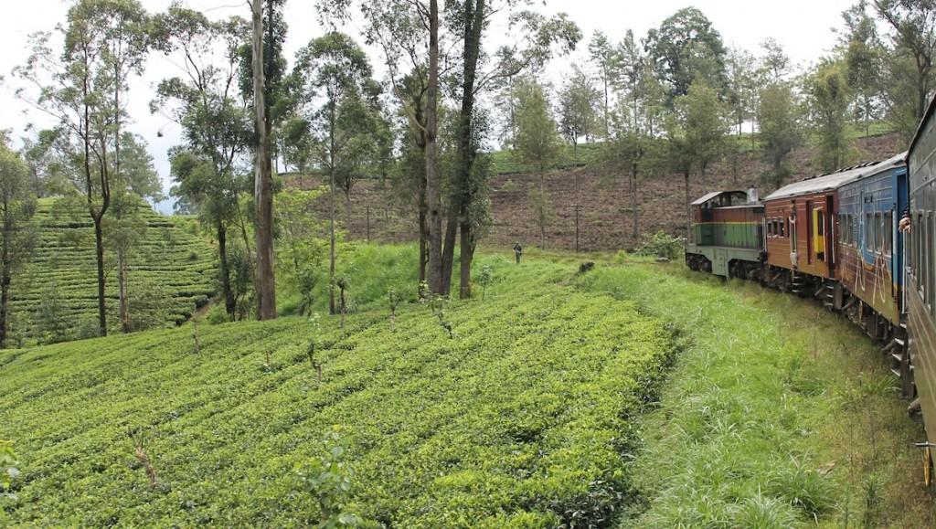 Zug Sri Lanka_Tee