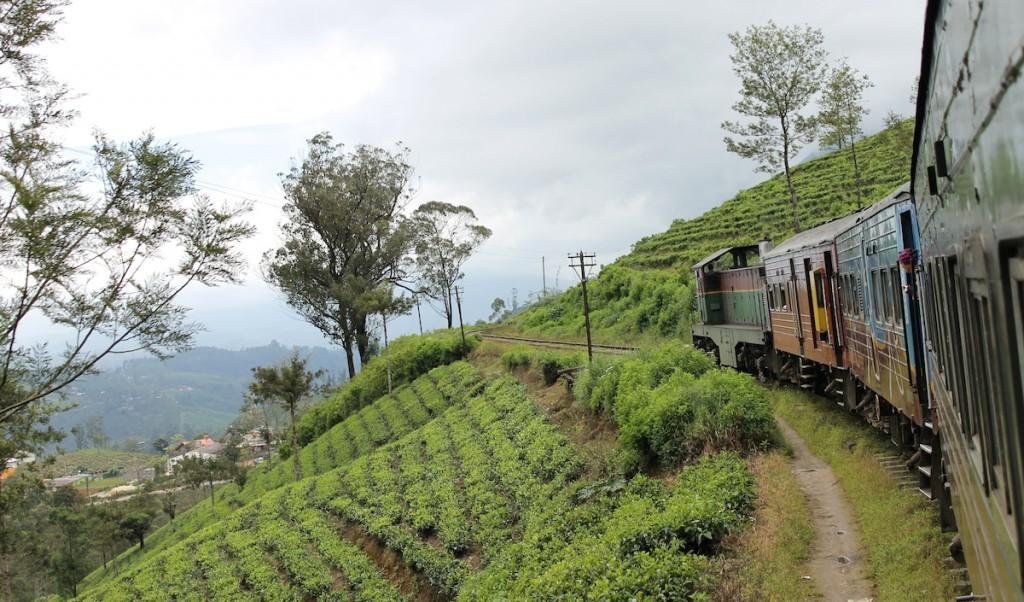 Zug Sri Lanka_Teeplantage