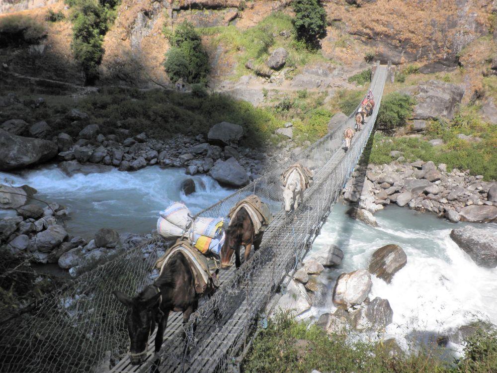 Esel tragen das Gepäck in Nepal