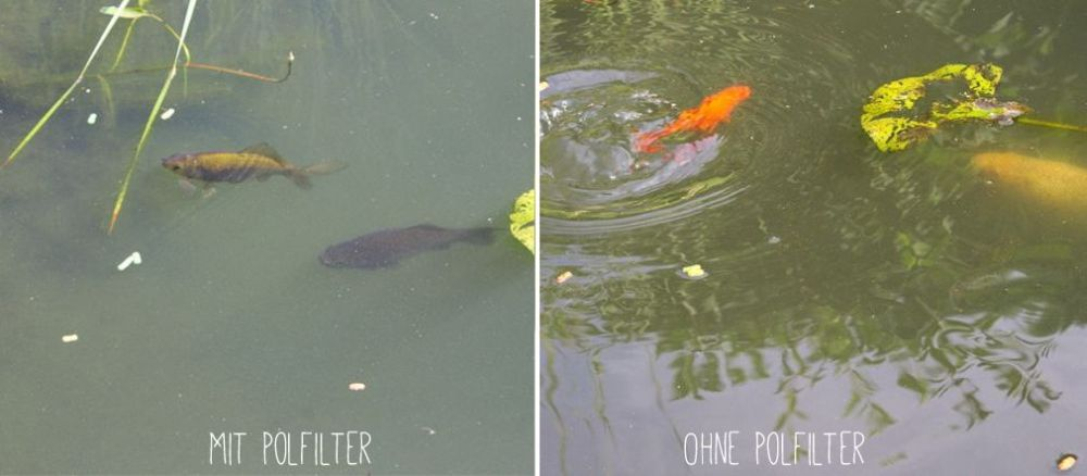 Teich mit und ohne Polfilter