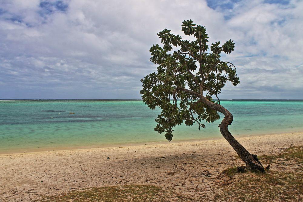 Baum auf Mauritius