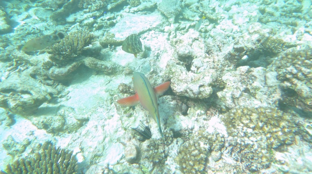 Fisch vor den Seychellen