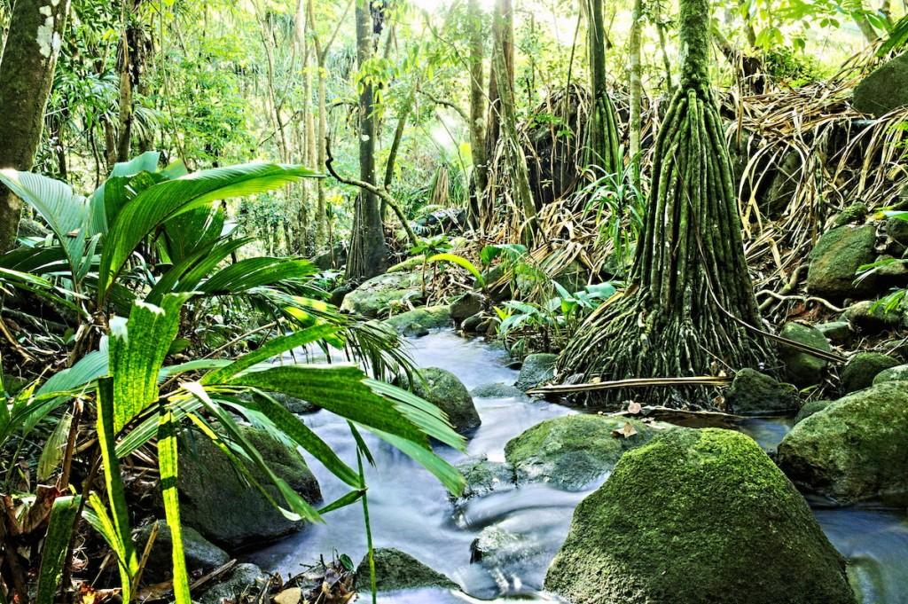 Natur auf den Seychellen