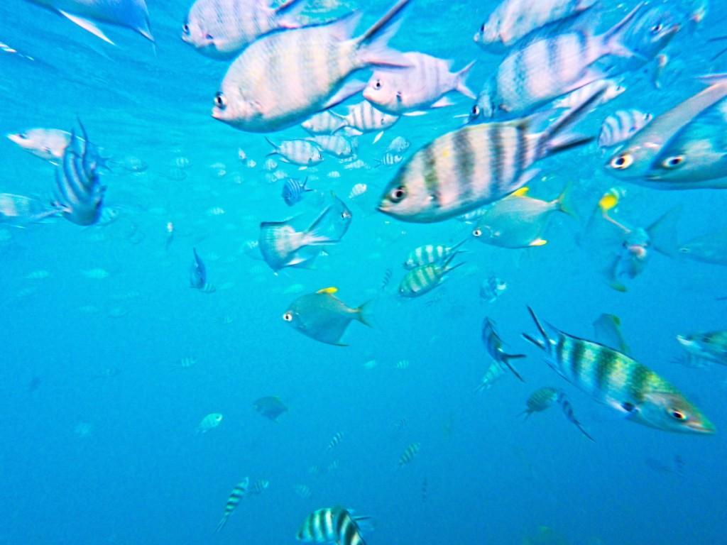 Fische Sainte Anne Marine Park