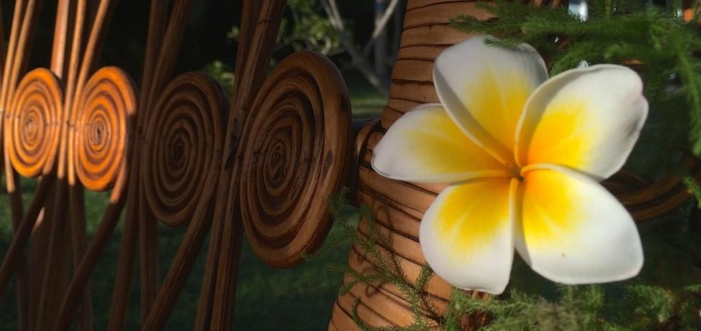 Blüte auf den Seychellen