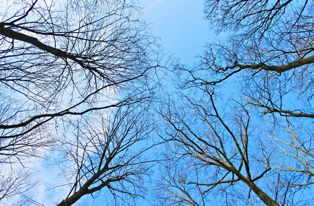 Bäume im Grafenberger Wald