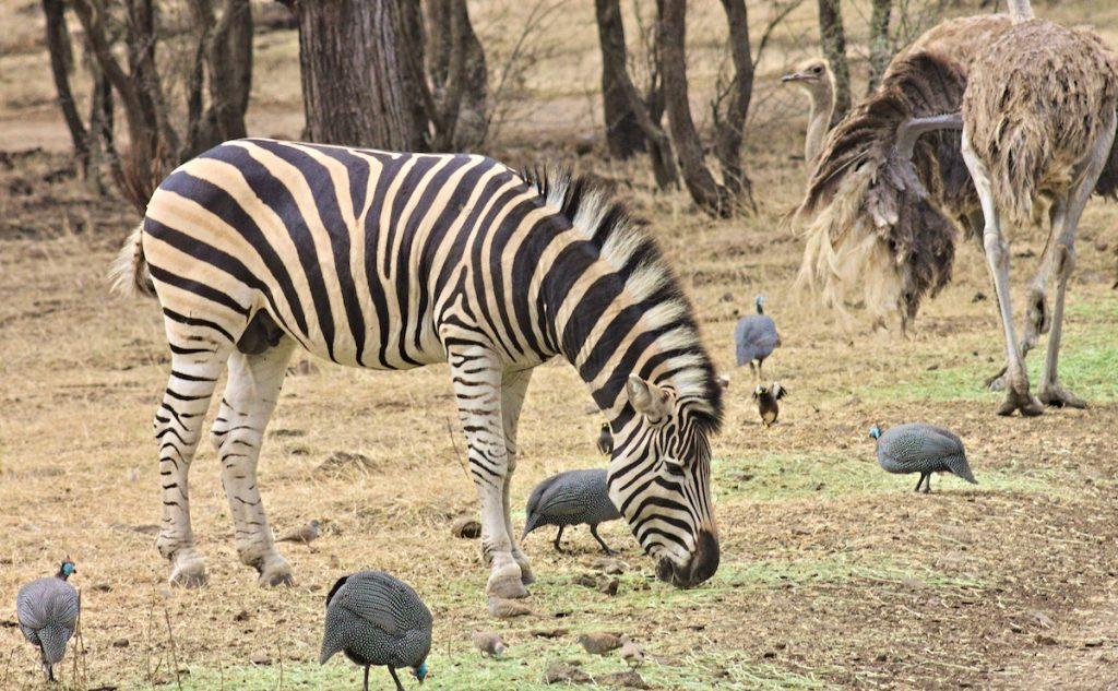 Safari auf Mauritius
