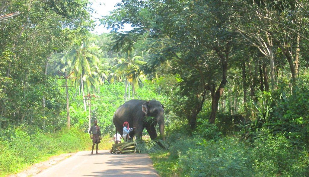 Elefant in Indien