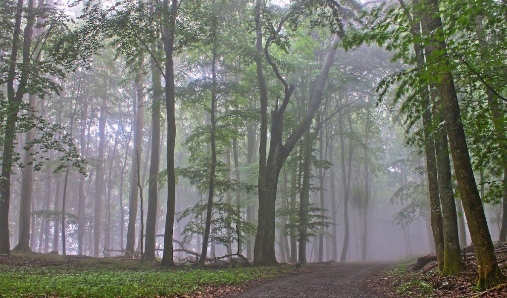 Nebel beim Wandern