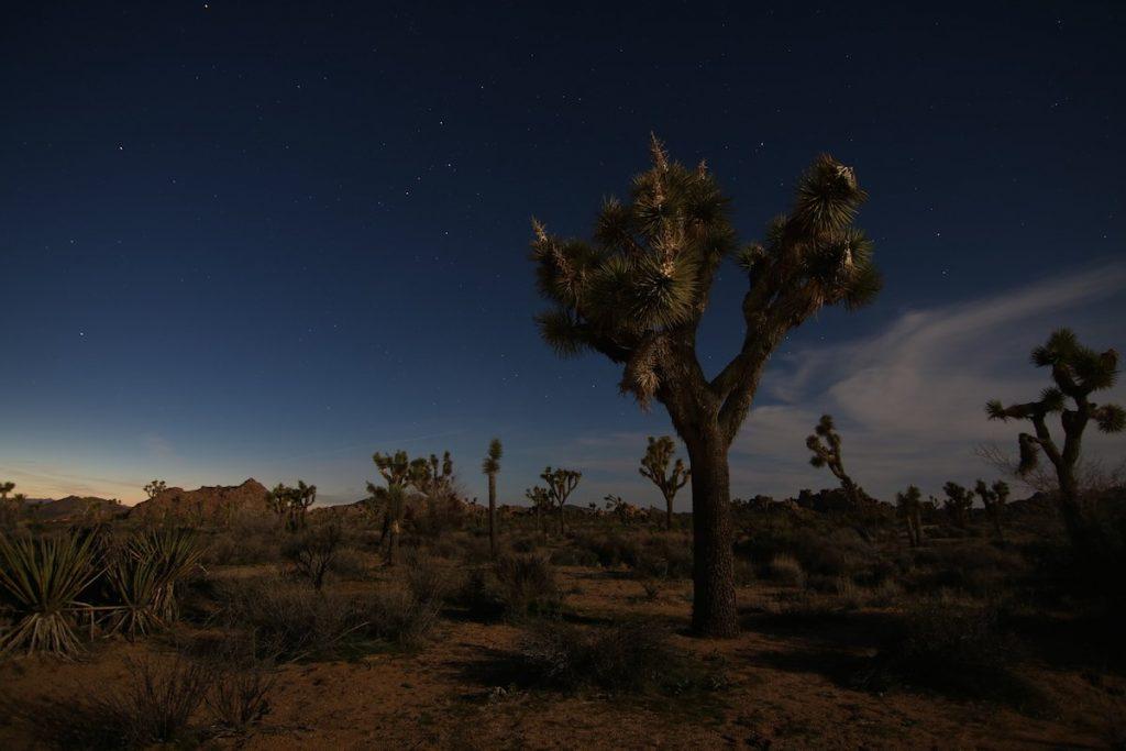 Joshua Tree Nationalpark bei Nacht