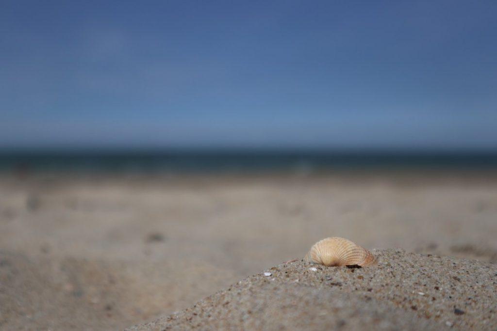 Urlaub mit Baby am Meer in Niederlande