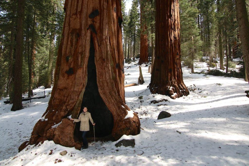 Heiratsantrag auf Reise im Wald
