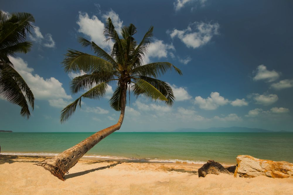 Fotospots in Thailand perfekte Palme