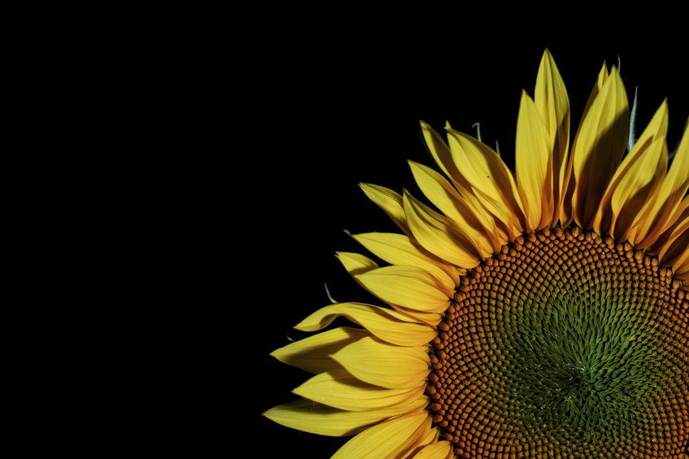 Die schönsten Fotos 2020 Struktur Blume
